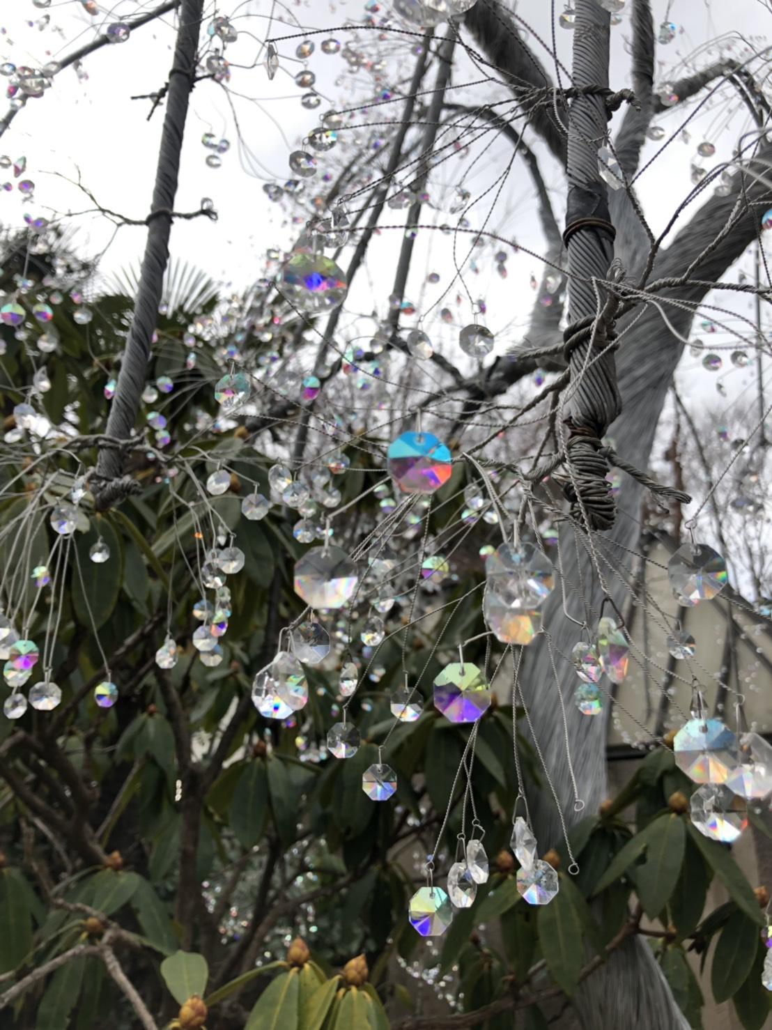 ガラスの木 アップ