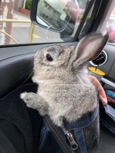 りりドライブ